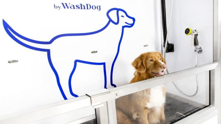 6 powodów, dla których ludzie i psy chętnie korzystają z samoobsługowych myjni dla psów